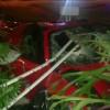 2014 Ferrari 458 Spyder crashed into house in Miami Beach